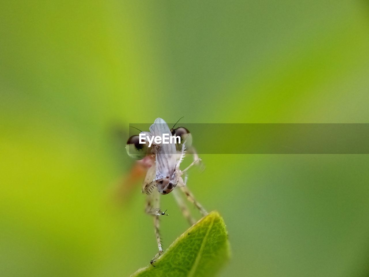animal wildlife, animal, animal themes, invertebrate, animals in the wild, insect, one animal, close-up, plant, green color, plant part, leaf, nature, no people, beauty in nature, zoology, day, arthropod, growth, selective focus