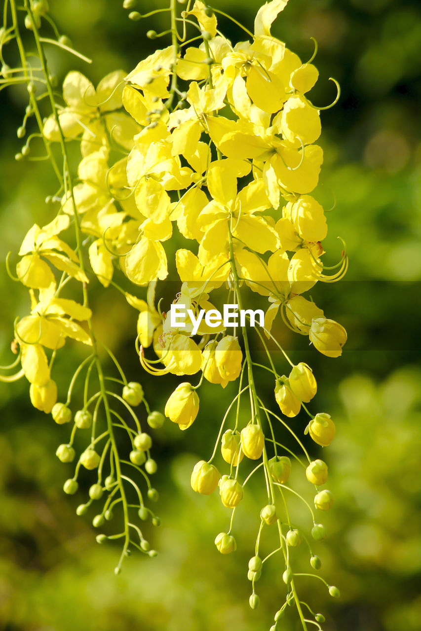 flower, flowering plant, beauty in nature, vulnerability, growth, fragility, yellow, plant, freshness, close-up, petal, no people, nature, flower head, inflorescence, day, focus on foreground, selective focus, outdoors, springtime