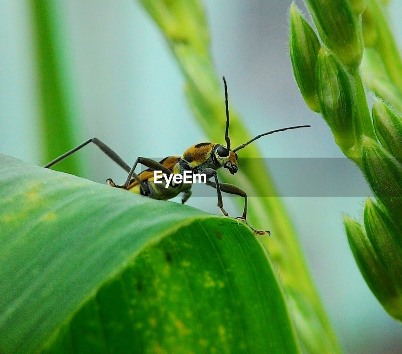 plant part, leaf, invertebrate, insect, animal themes, animal, animals in the wild, animal wildlife, one animal, green color, close-up, selective focus, plant, nature, no people, growth, day, animal antenna, animal body part, zoology, outdoors