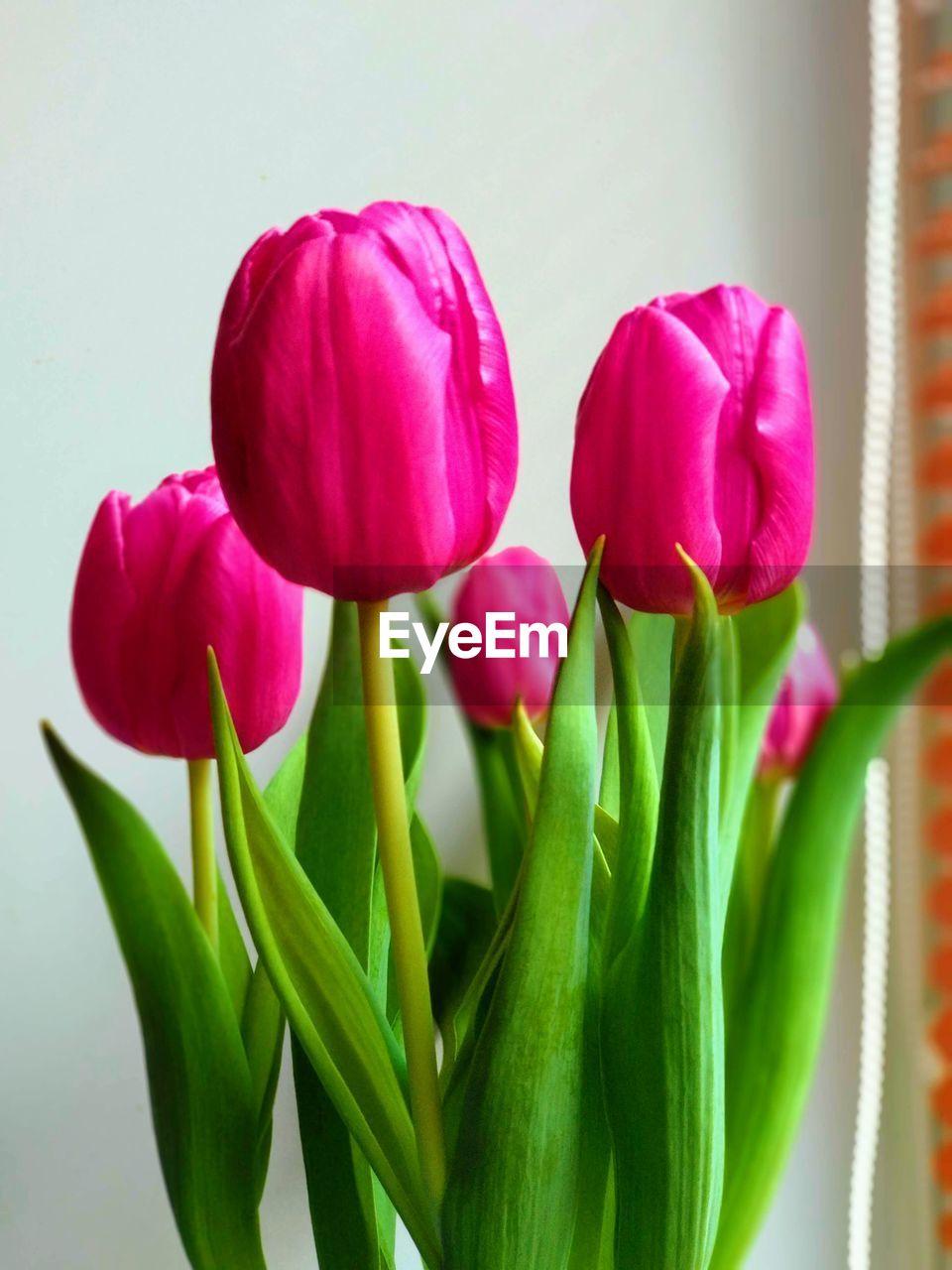 flower, flowering plant, plant, freshness, beauty in nature, tulip, fragility, vulnerability, close-up, petal, plant part, leaf, flower head, indoors, nature, green color, inflorescence, pink color, no people, vase, flower arrangement, purple, bunch of flowers