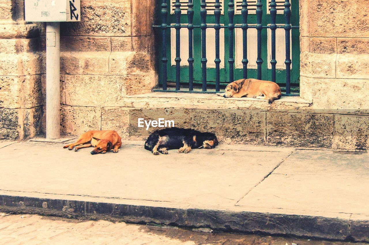 animal themes, mammal, sleeping, relaxation, day, lying down, no people, built structure, outdoors, domestic animals, architecture, building exterior