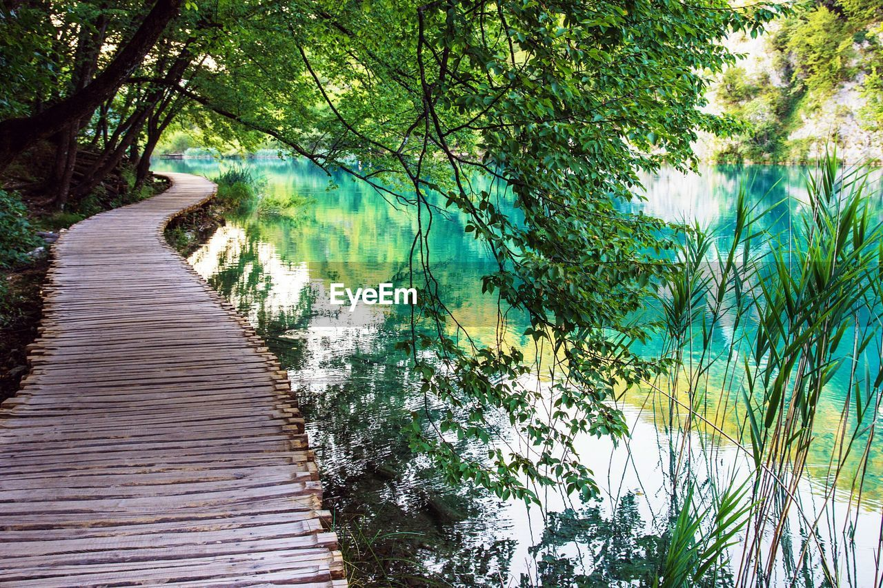 tree, nature, water, lake, tranquil scene, no people, scenics, beauty in nature, day, forest, outdoors, growth, plant, grass