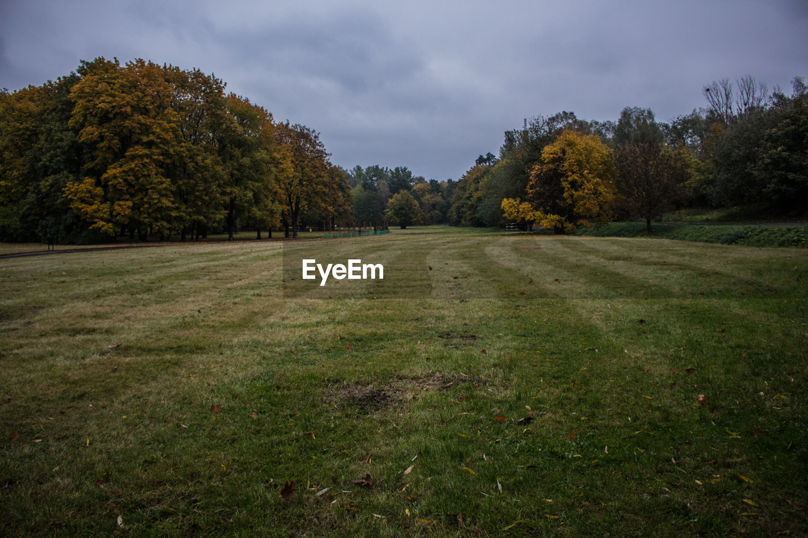 SCENIC VIEW OF TREES ON GRASSY FIELD AGAINST CLOUDY SKY