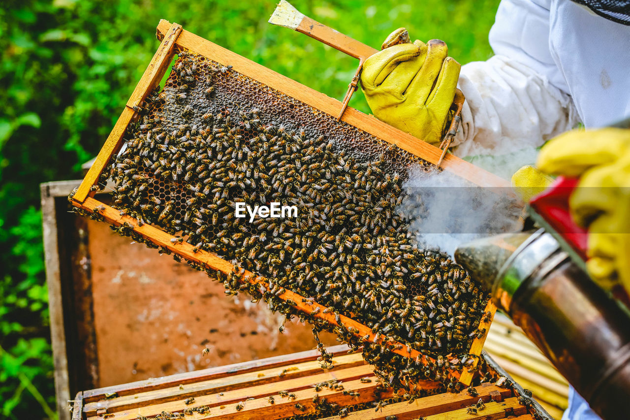 Cropped Hands Of Man Holding Beehive With Bees On Field