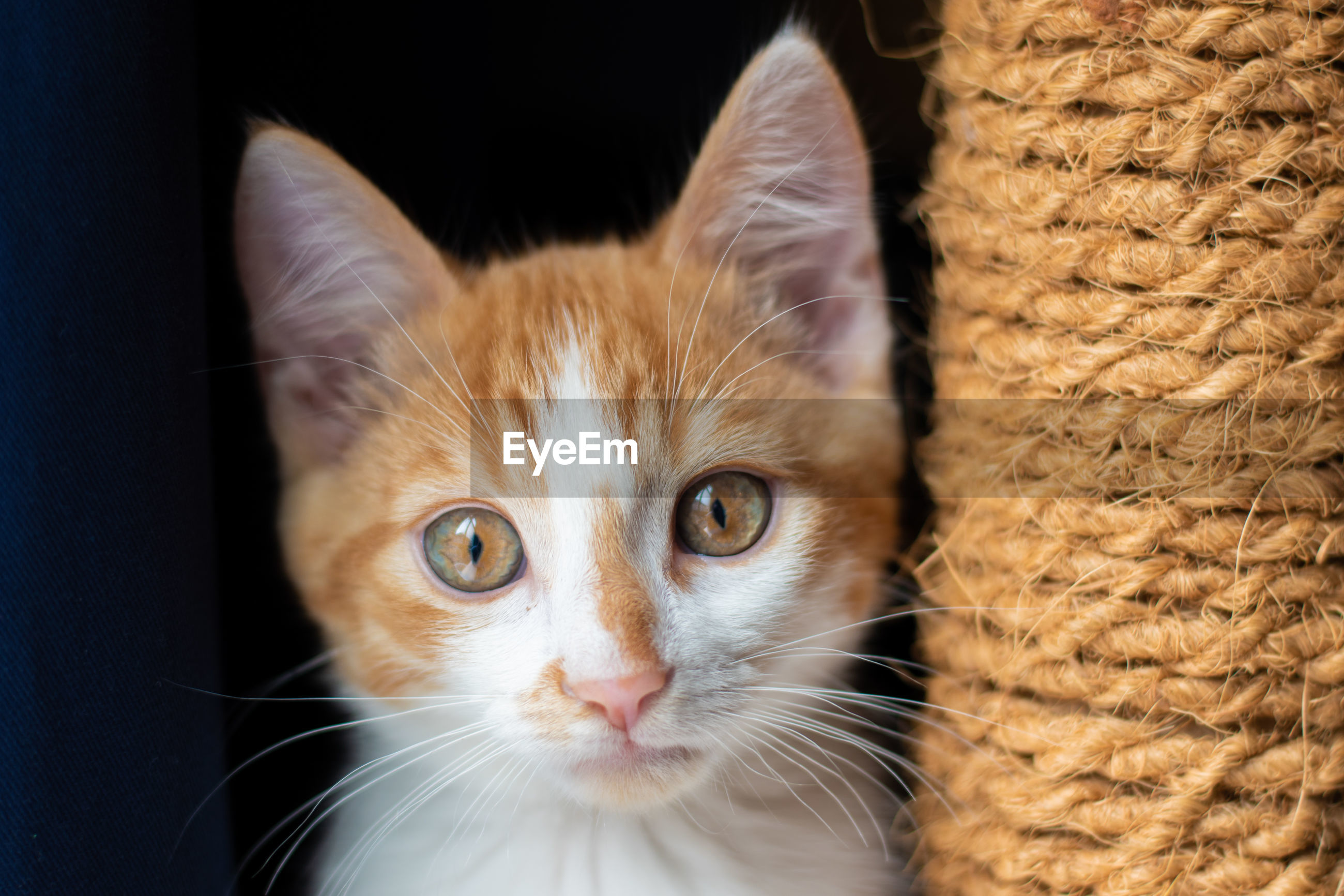 CLOSE-UP PORTRAIT OF CAT WITH EYES AND INDOORS