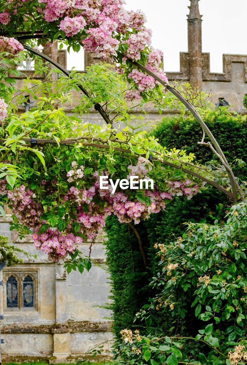 flower, flowering plant, plant, built structure, architecture, growth, nature, freshness, pink color, building exterior, building, beauty in nature, day, fragility, no people, tree, vulnerability, blossom, outdoors, springtime, cherry blossom