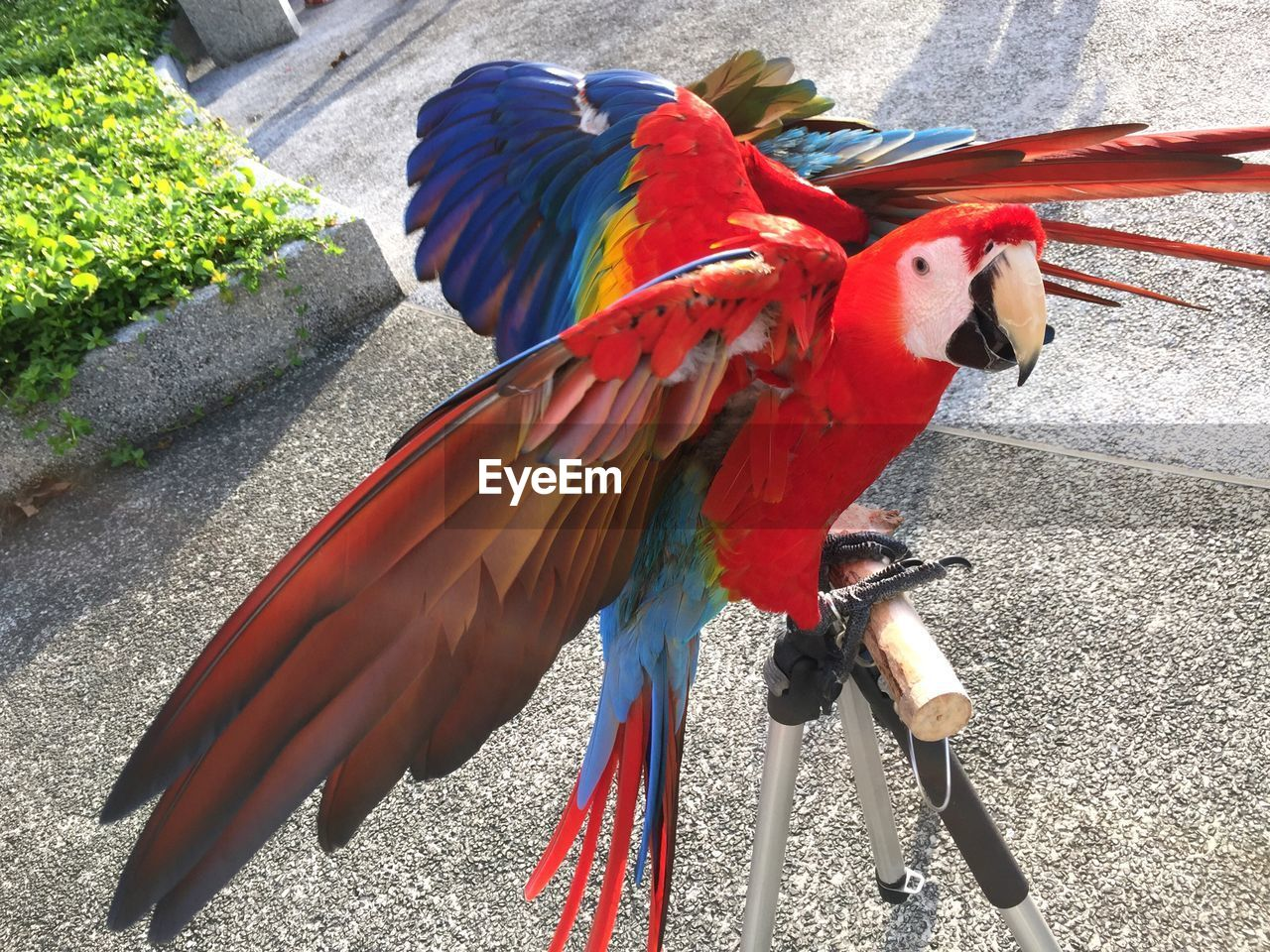 High Angle View Of Scarlet Macaw Perching On Stand