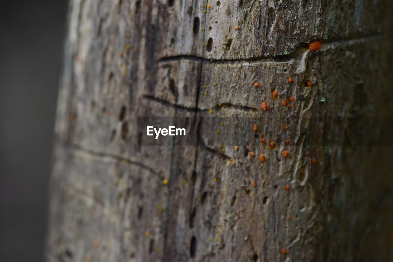 textured, tree trunk, close-up, trunk, selective focus, tree, no people, rough, plant bark, pattern, plant, nature, wood - material, day, weathered, outdoors, cracked, animal themes, brown, natural pattern, bark
