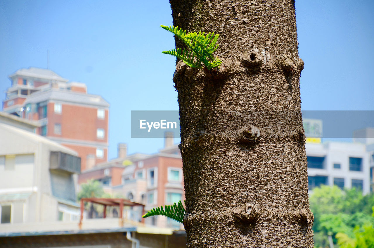 built structure, focus on foreground, day, building exterior, outdoors, no people, architecture, nature, tree, tree trunk, close-up, growth, plant, one animal, sky, animal themes