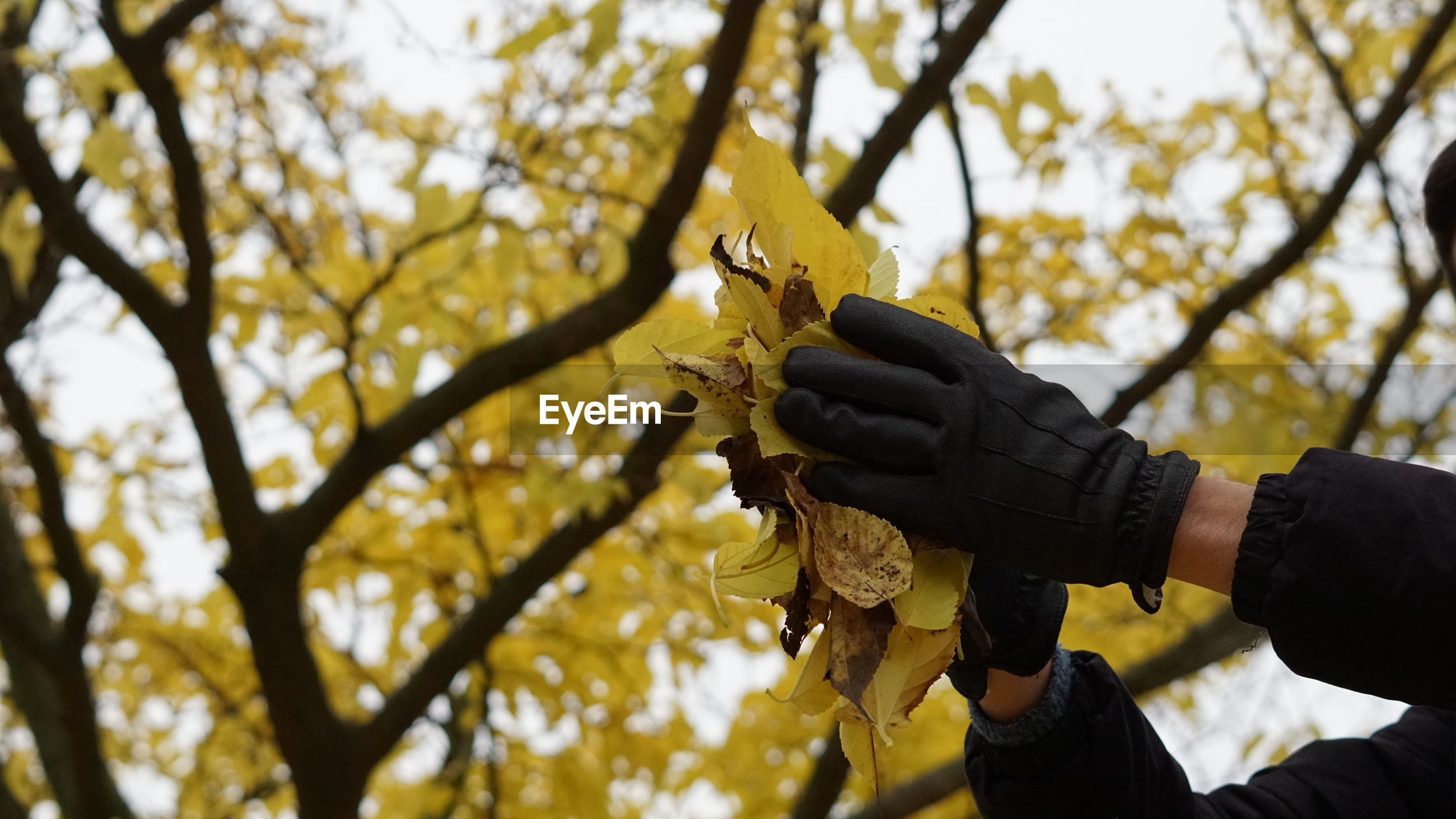 Low angle view of hand holding leaves during autumn