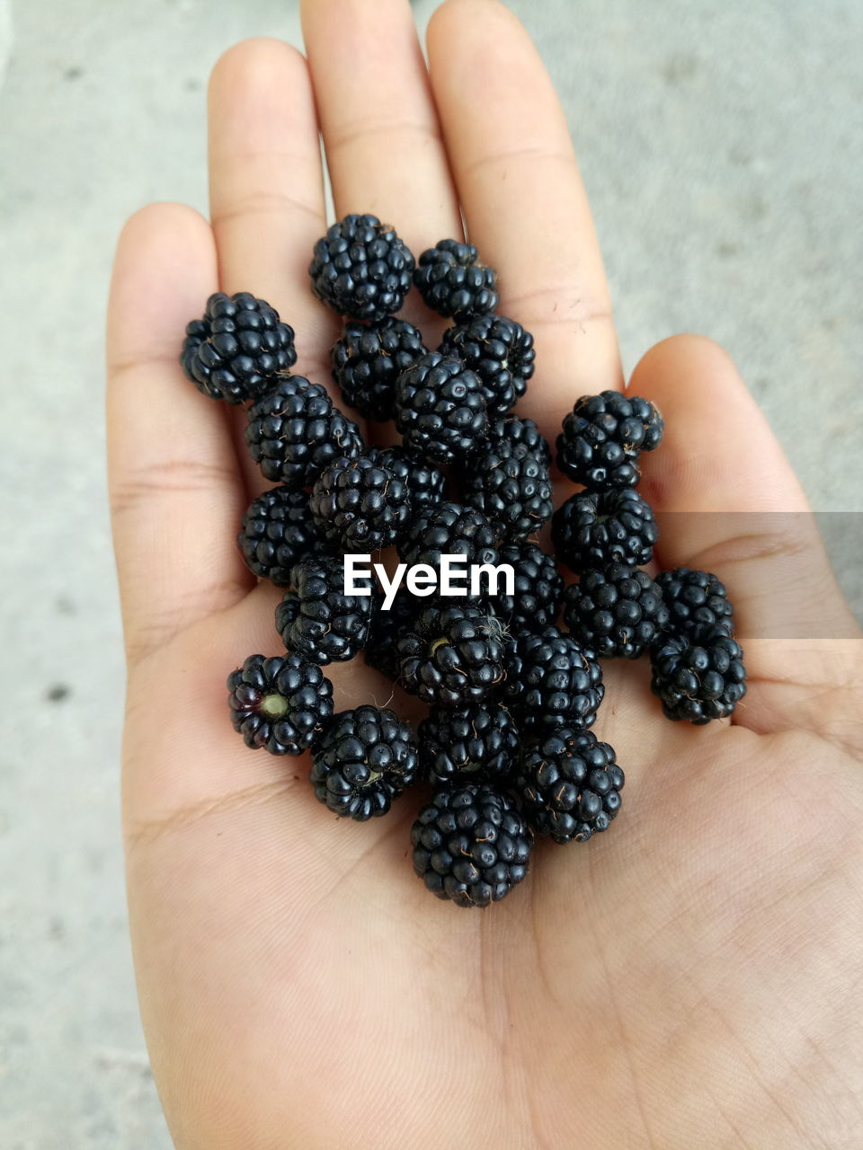 human hand, human body part, hand, one person, berry fruit, healthy eating, holding, food, body part, food and drink, wellbeing, fruit, real people, unrecognizable person, close-up, freshness, finger, blackberry - fruit, focus on foreground, human finger, ripe