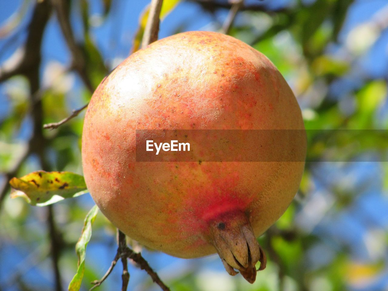 healthy eating, fruit, food and drink, close-up, food, focus on foreground, freshness, wellbeing, plant, tree, no people, growth, day, nature, fruit tree, red, branch, apple tree, outdoors, beauty in nature, ripe