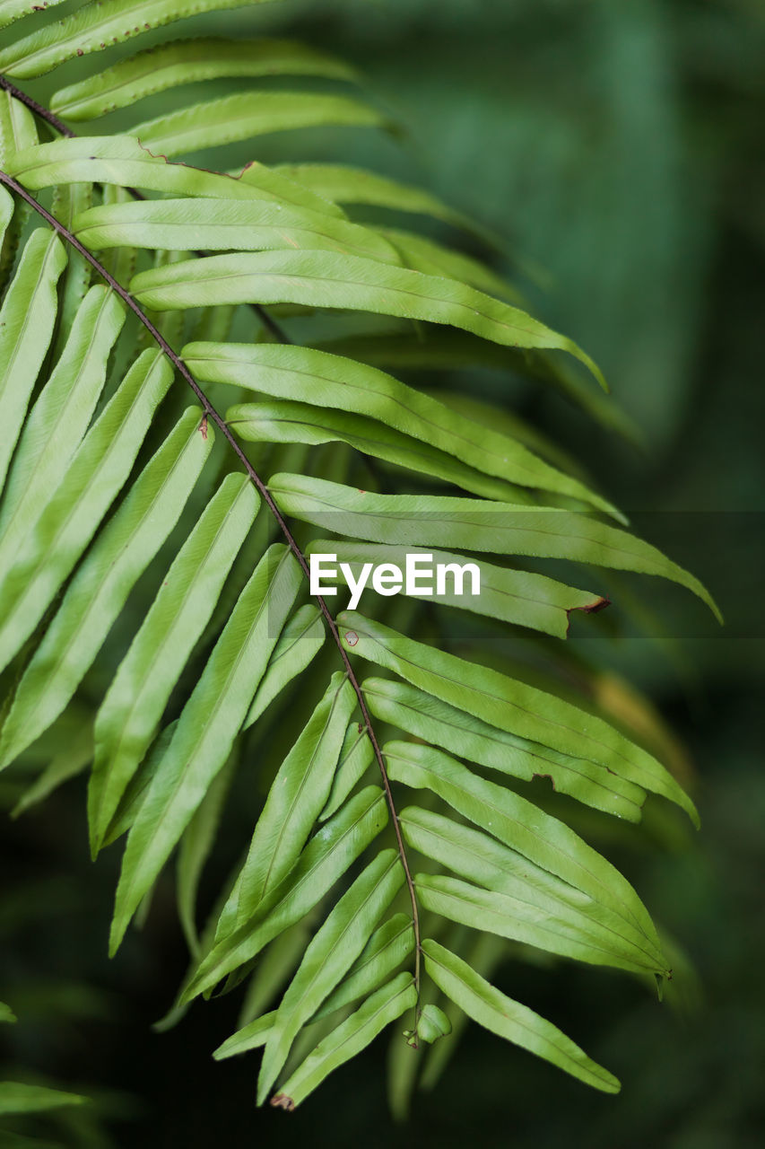 green color, growth, leaf, plant part, plant, close-up, focus on foreground, beauty in nature, nature, no people, day, outdoors, selective focus, tree, freshness, natural pattern, tranquility, pattern, leaves, botany, palm leaf