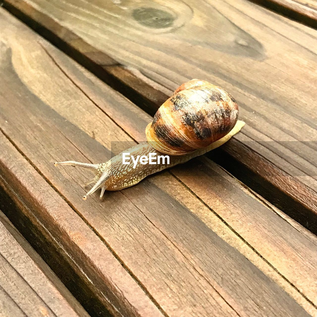 animal, animal wildlife, wood - material, gastropod, animal themes, mollusk, shell, snail, invertebrate, boredom, close-up, animals in the wild, one animal, animal shell, no people, brown, crawling, outdoors, slimy, nature, wood