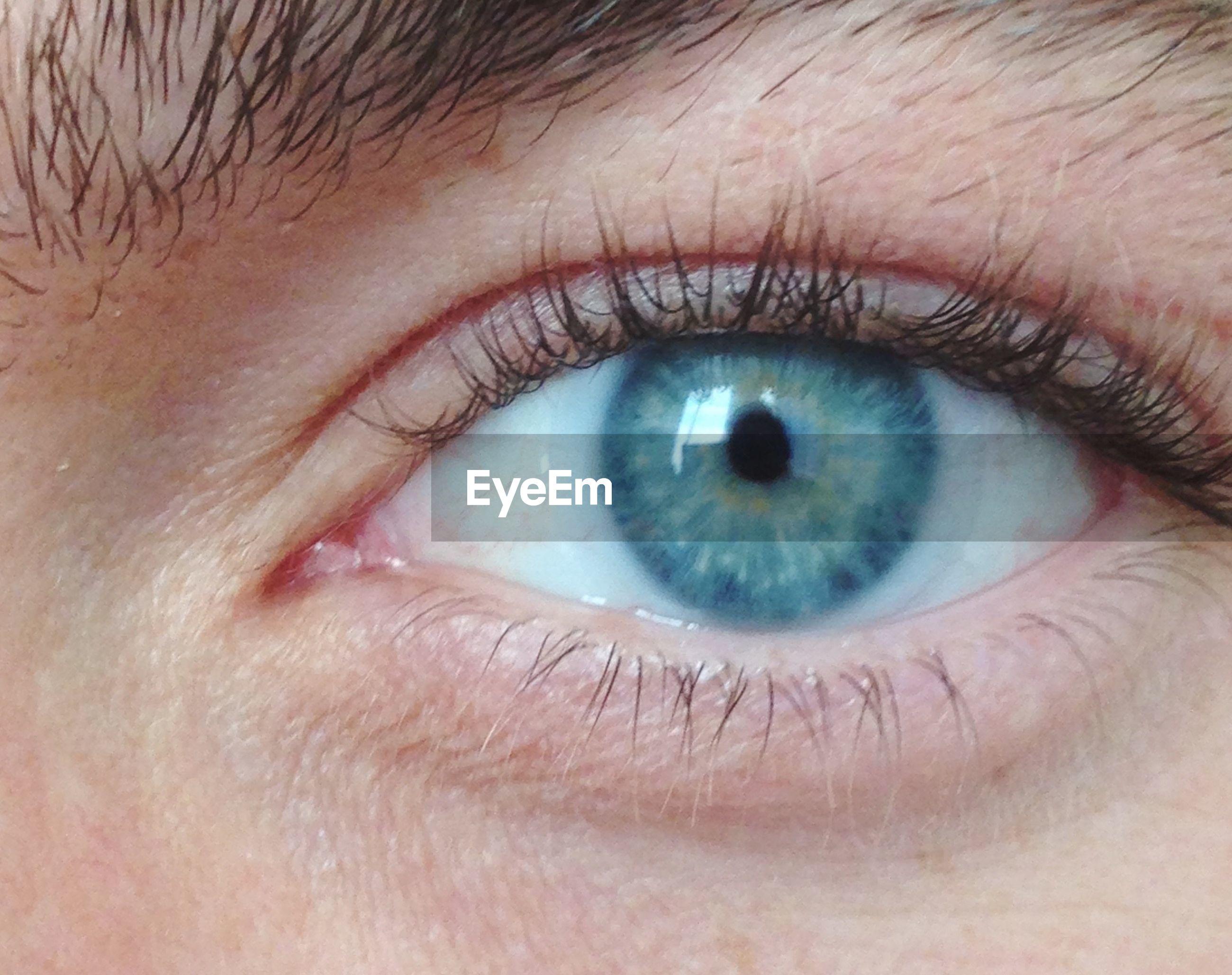 human eye, eyelash, eyesight, close-up, sensory perception, human skin, iris - eye, part of, eyeball, extreme close-up, looking at camera, eyebrow, human face, portrait, lifestyles, extreme close up, vision