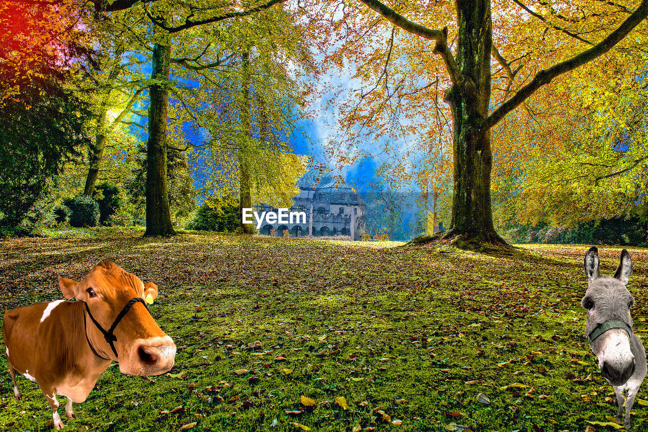 autumn, tree, domestic animals, animal themes, mammal, leaf, grass, dog, one animal, field, nature, day, pets, outdoors, no people, beauty in nature, sky