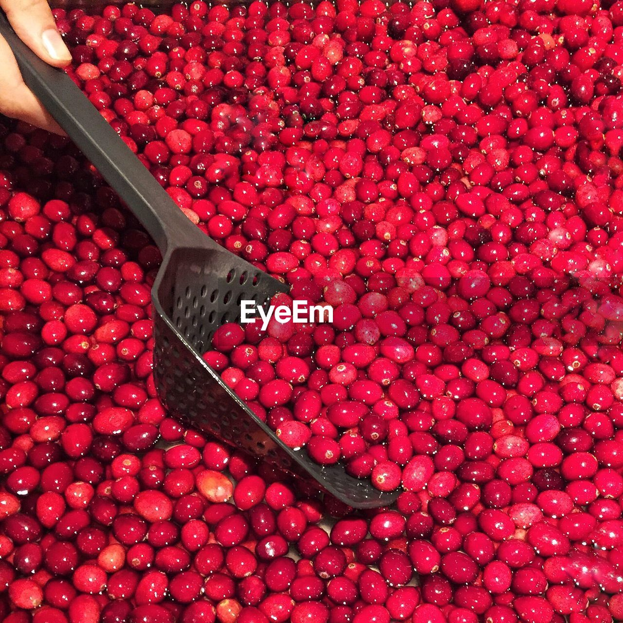 Close-up of cranberries with spoon