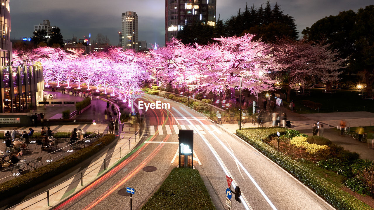 city, plant, architecture, street, tree, building exterior, built structure, transportation, road, illuminated, group of people, nature, motion, outdoors, city life, real people, mode of transportation, incidental people, night, pink color, purple
