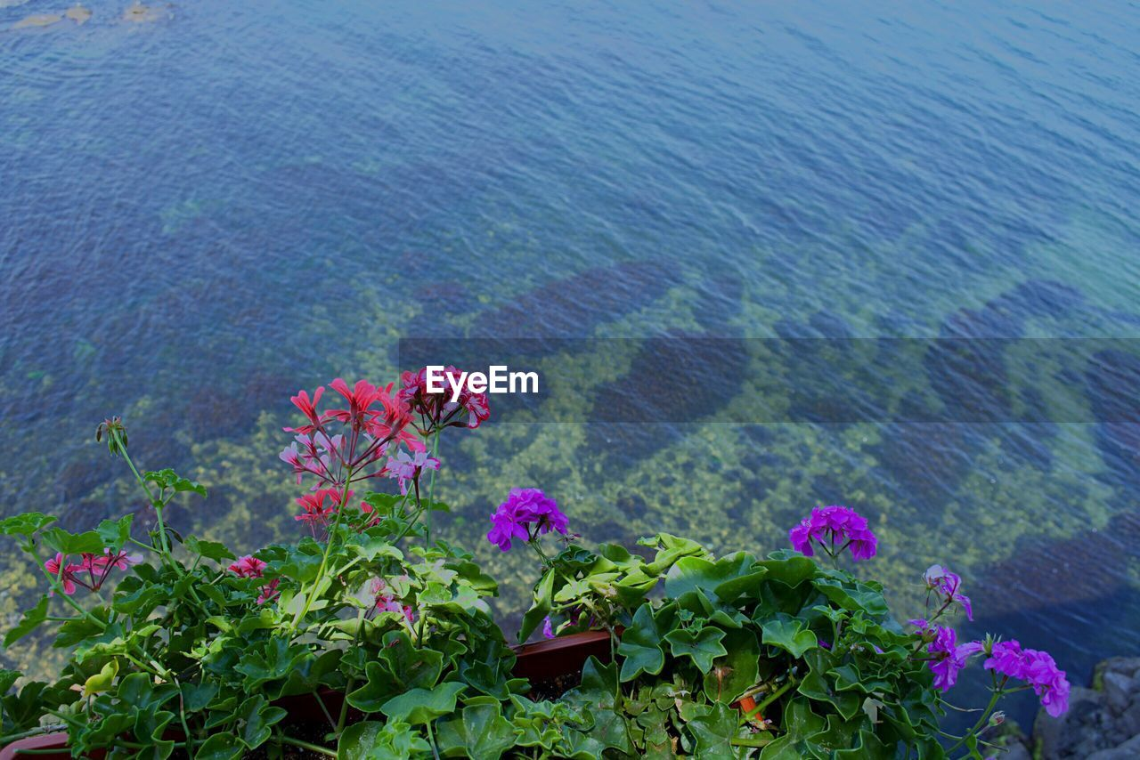 nature, beauty in nature, no people, growth, tranquility, plant, high angle view, tranquil scene, scenics, day, sea, outdoors, water, flower, fragility, close-up, freshness