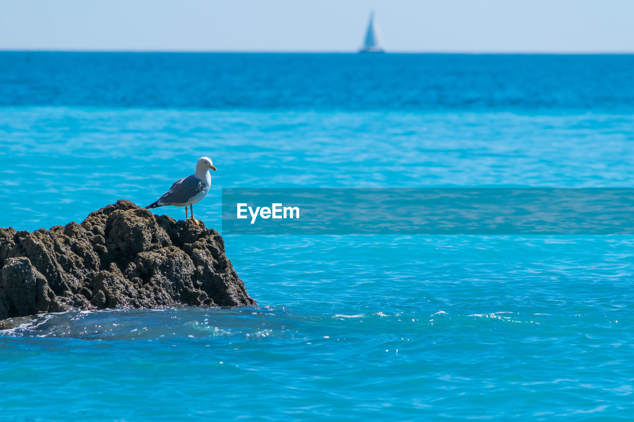 animal themes, animals in the wild, vertebrate, animal, animal wildlife, water, bird, one animal, sea, perching, beauty in nature, sky, waterfront, day, blue, nature, scenics - nature, no people, rock - object, horizon over water, seagull, outdoors