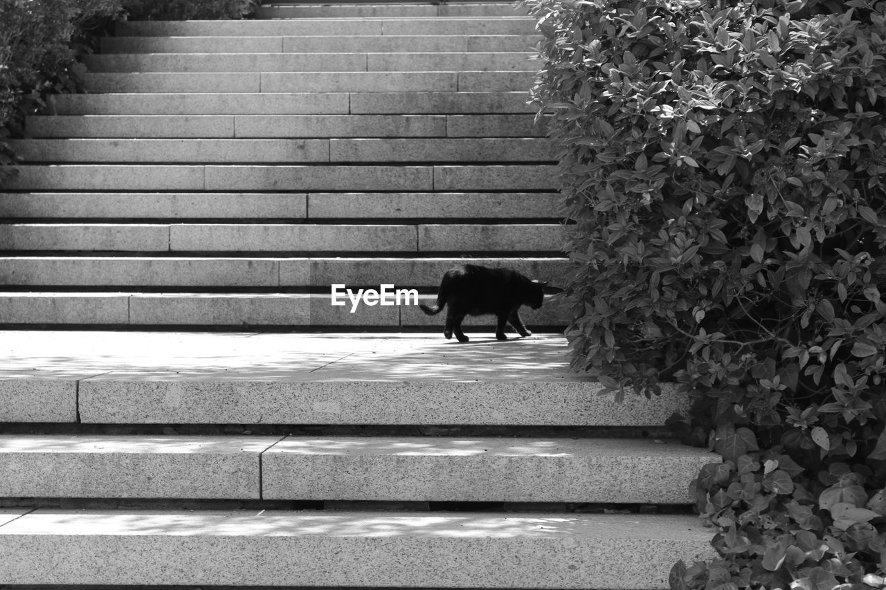 Cat walking on steps