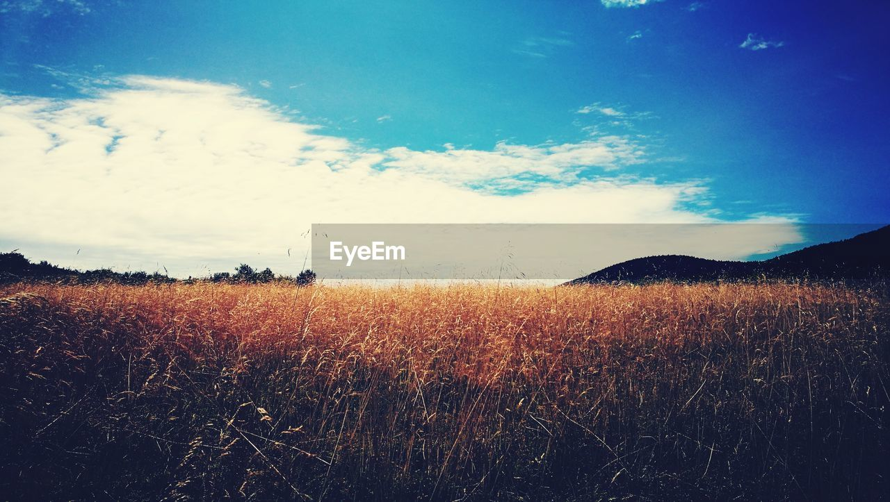 sky, field, landscape, nature, tranquility, beauty in nature, growth, tranquil scene, no people, scenics, grass, outdoors, day