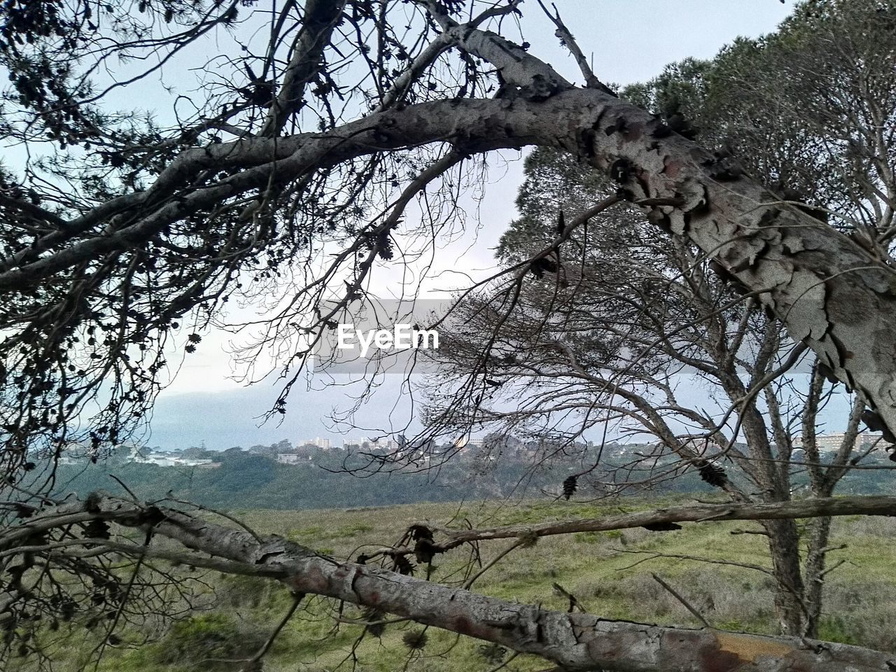 tree, branch, nature, bare tree, low angle view, day, sky, dead plant, outdoors, beauty in nature, no people, tranquility, tranquil scene, growth, landscape, dead tree, scenics, forest, tree trunk, animal themes, bird of prey