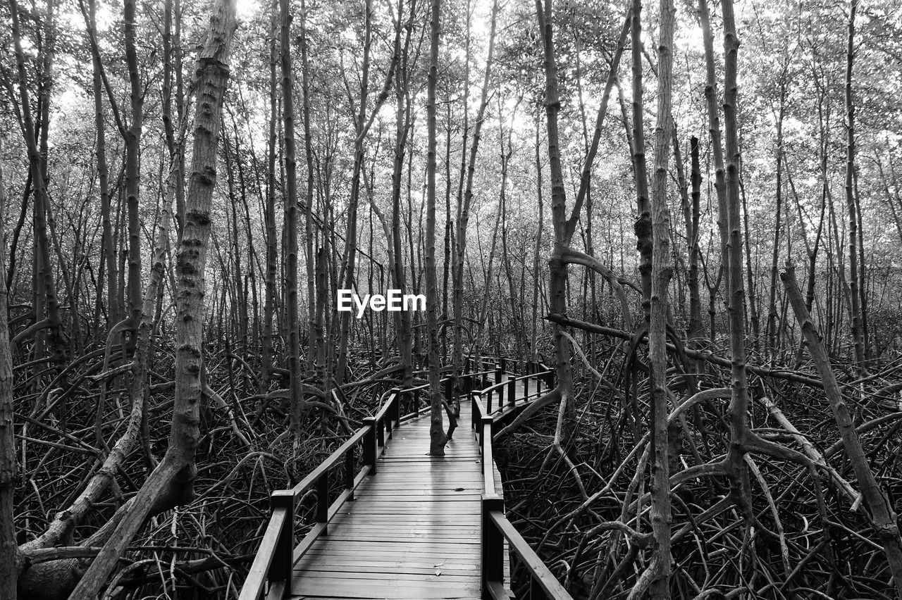 tree, forest, land, plant, direction, the way forward, nature, tranquility, wood - material, day, footpath, woodland, tranquil scene, no people, boardwalk, beauty in nature, outdoors, growth, scenics - nature, wood, footbridge