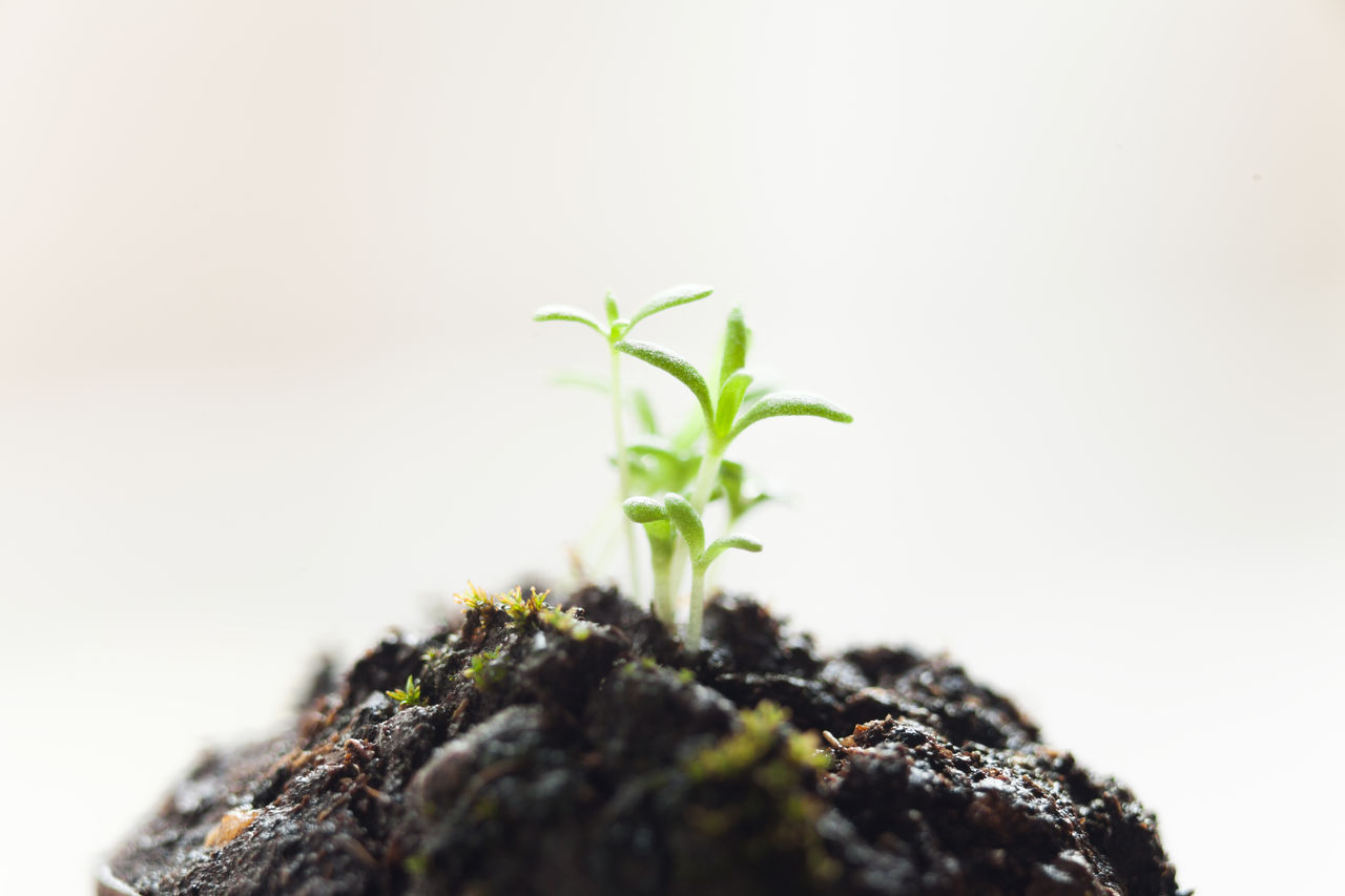 Close-Up Of Seedling
