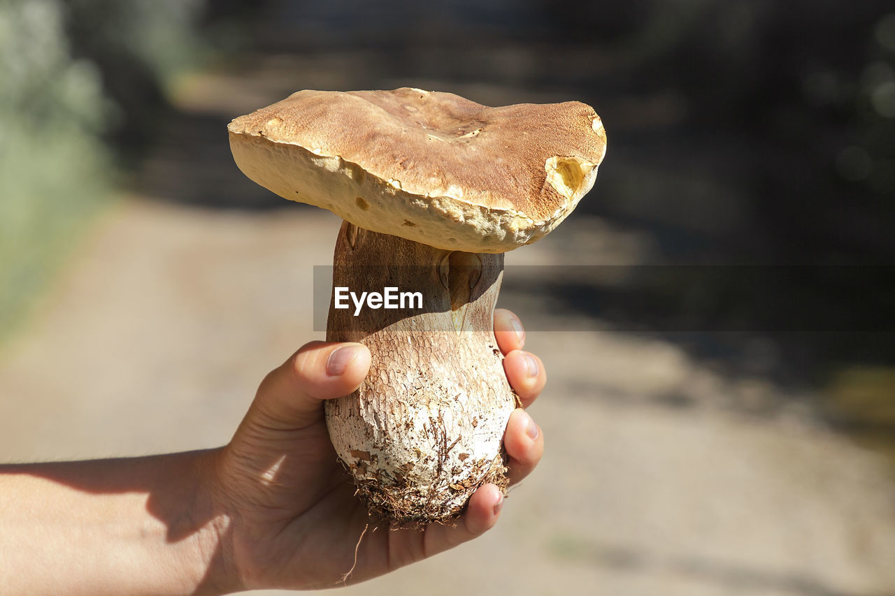 holding, human hand, food, human body part, food and drink, one person, hand, real people, focus on foreground, freshness, body part, unrecognizable person, lifestyles, mushroom, fungus, finger, day, human finger, close-up, outdoors, temptation