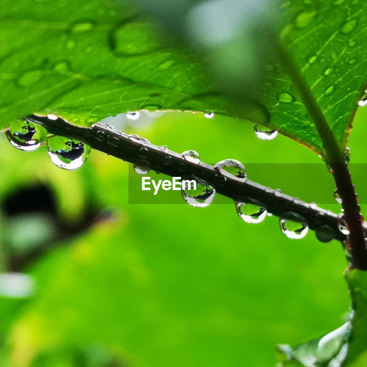 drop, water, wet, plant part, plant, leaf, green color, nature, close-up, growth, rain, raindrop, no people, selective focus, beauty in nature, freshness, dew, day, purity, outdoors, rainy season, blade of grass, leaves