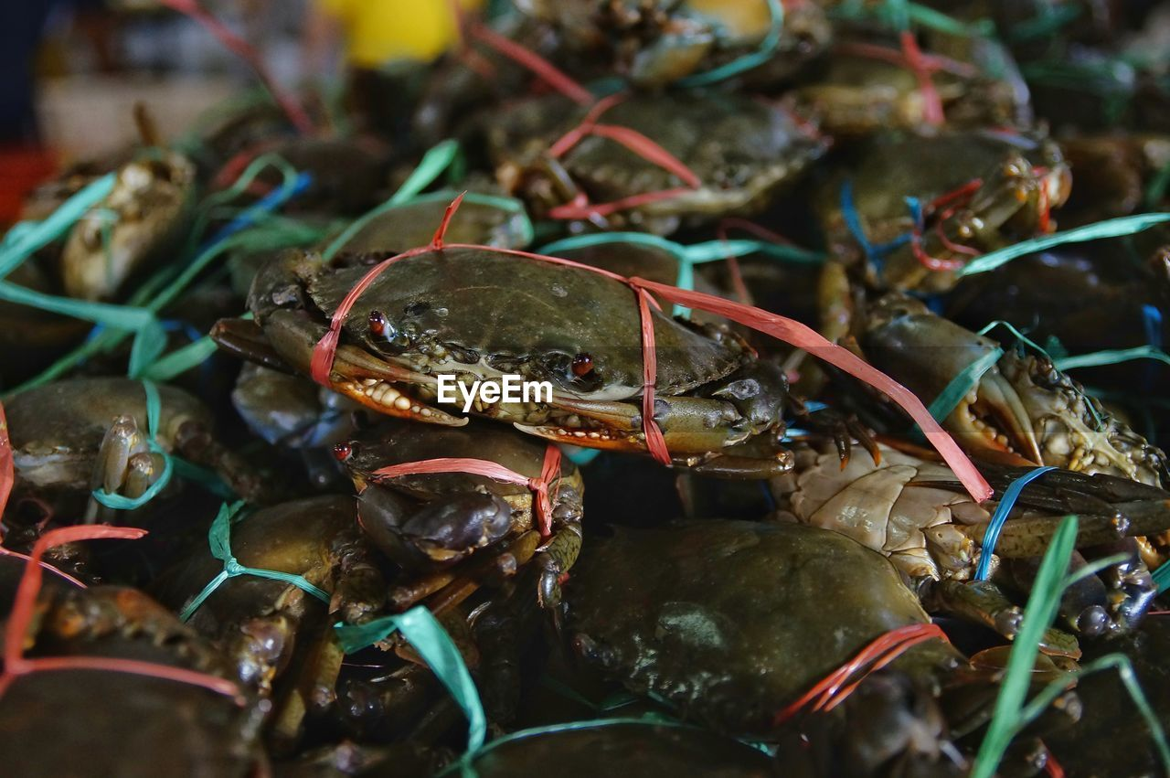 CLOSE-UP OF CRAB FOR SALE