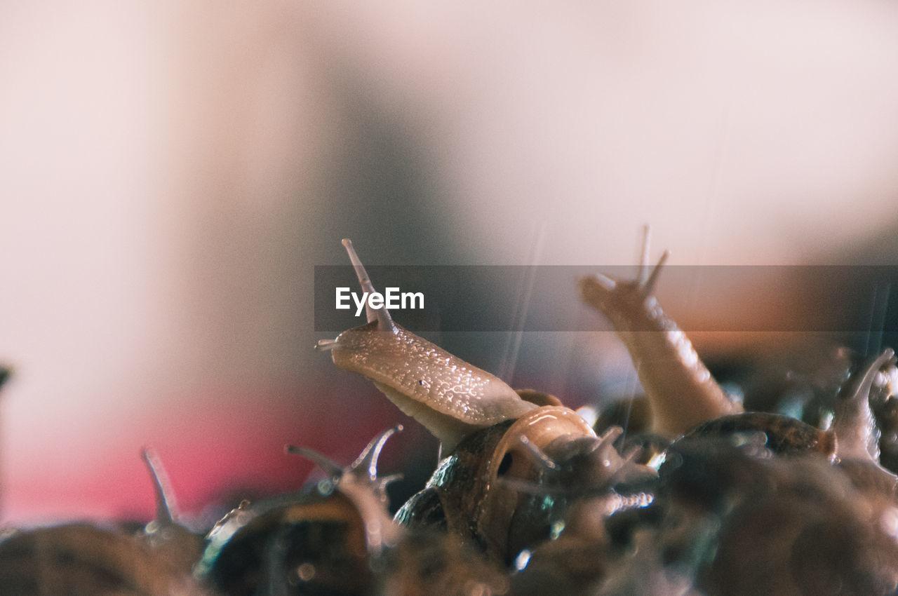 Close-Up Of Snails