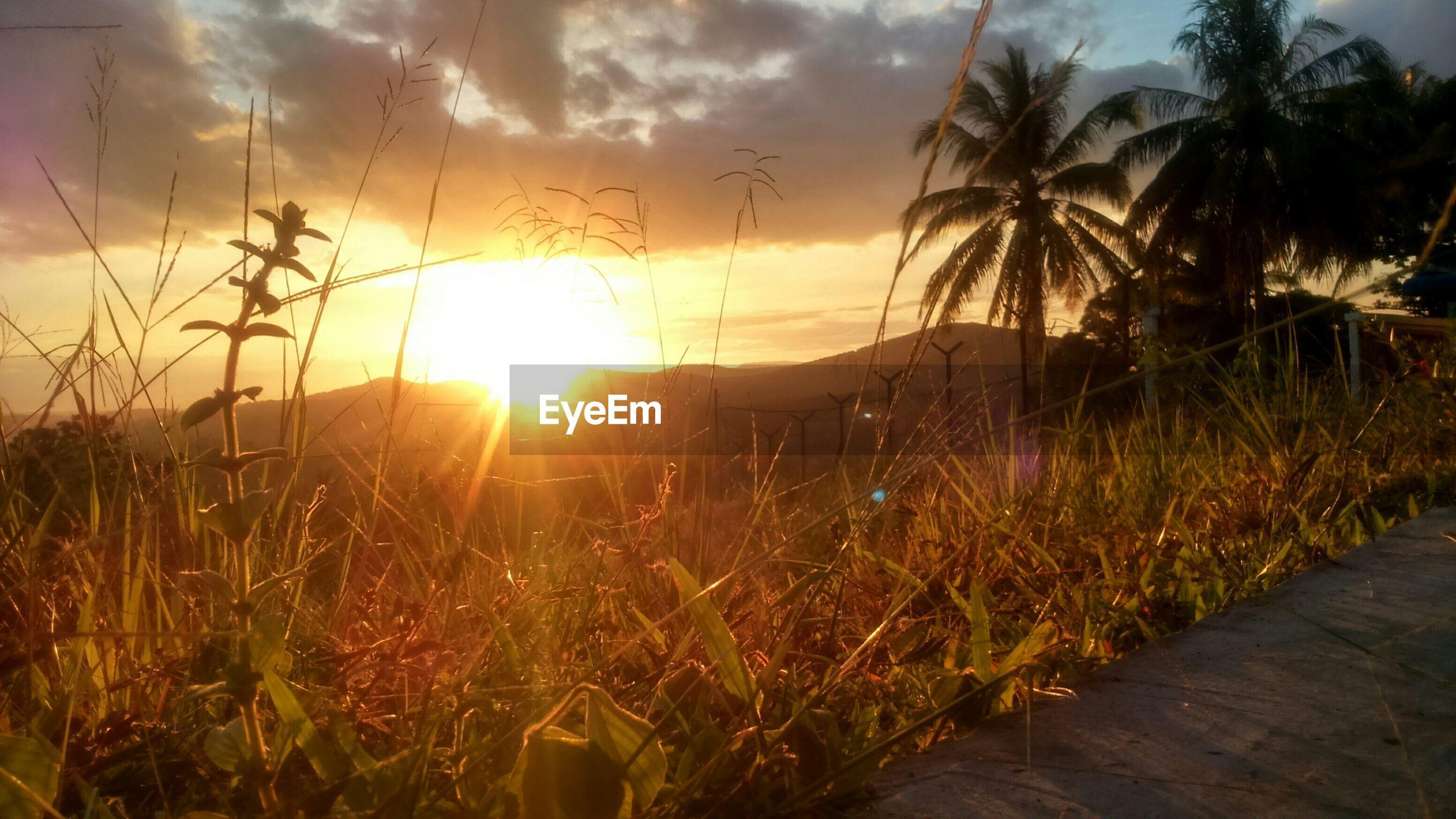 sun, sunset, sky, tranquility, sunlight, tranquil scene, sunbeam, beauty in nature, scenics, nature, plant, grass, lens flare, growth, cloud - sky, idyllic, water, orange color, field, cloud