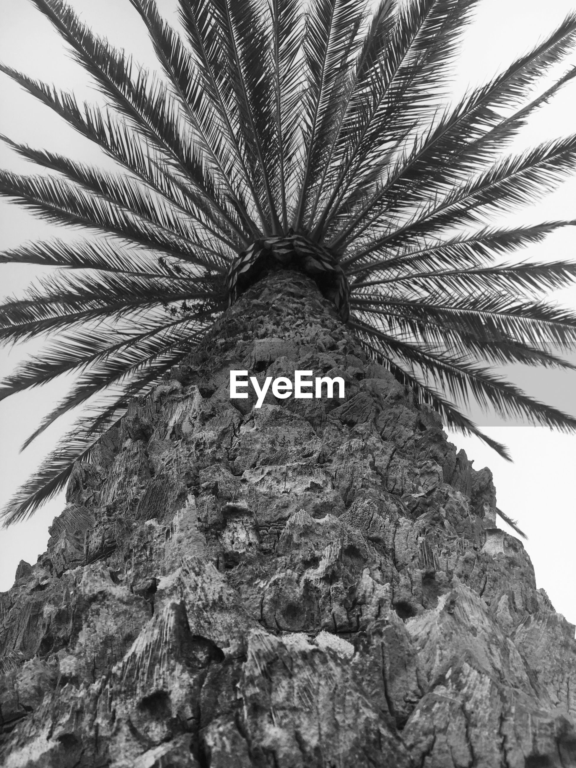 CLOSE-UP LOW ANGLE VIEW OF PALM TREE AGAINST SKY