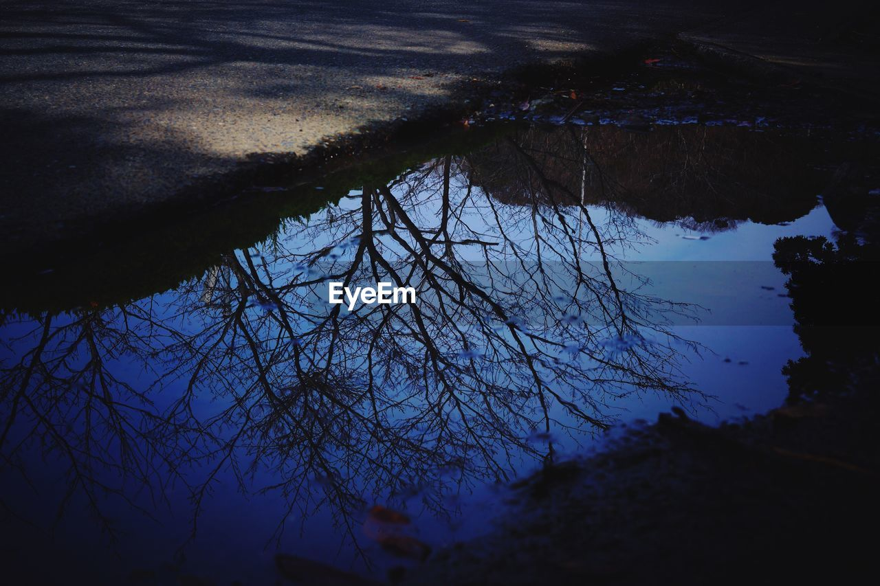 reflection, silhouette, nature, outdoors, tree, no people, water, tranquility, beauty in nature, growth, day, scenics, branch, sky