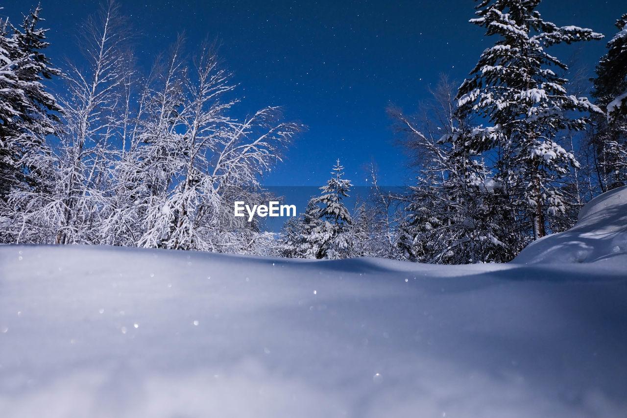 Frozen Trees Against Clear Blue Sky