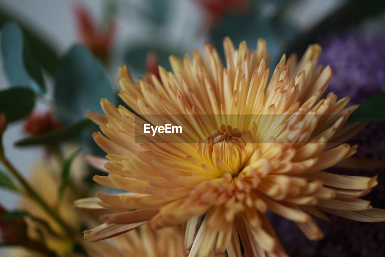 flower, flowering plant, plant, fragility, beauty in nature, vulnerability, petal, freshness, flower head, inflorescence, growth, close-up, nature, focus on foreground, no people, selective focus, pollen, day, botany