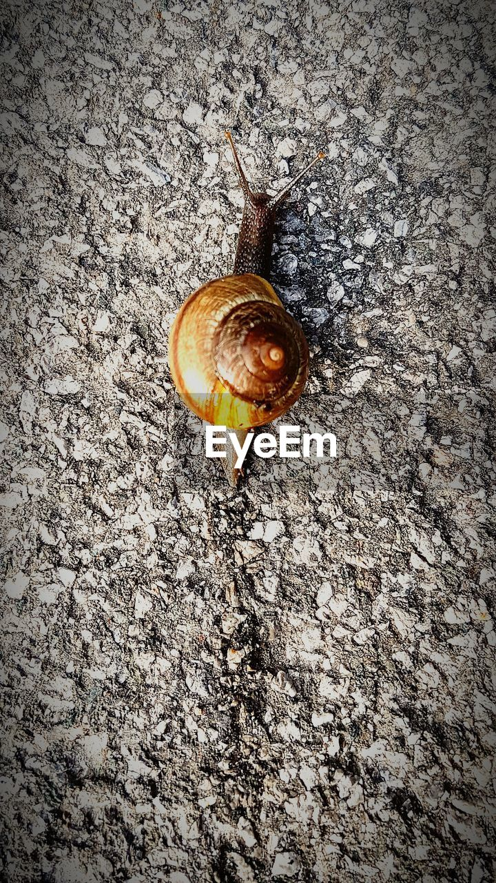 snail, one animal, animal themes, gastropod, wildlife, animals in the wild, close-up, fragility, no people, high angle view, nature, animal wildlife, outdoors, day, slug