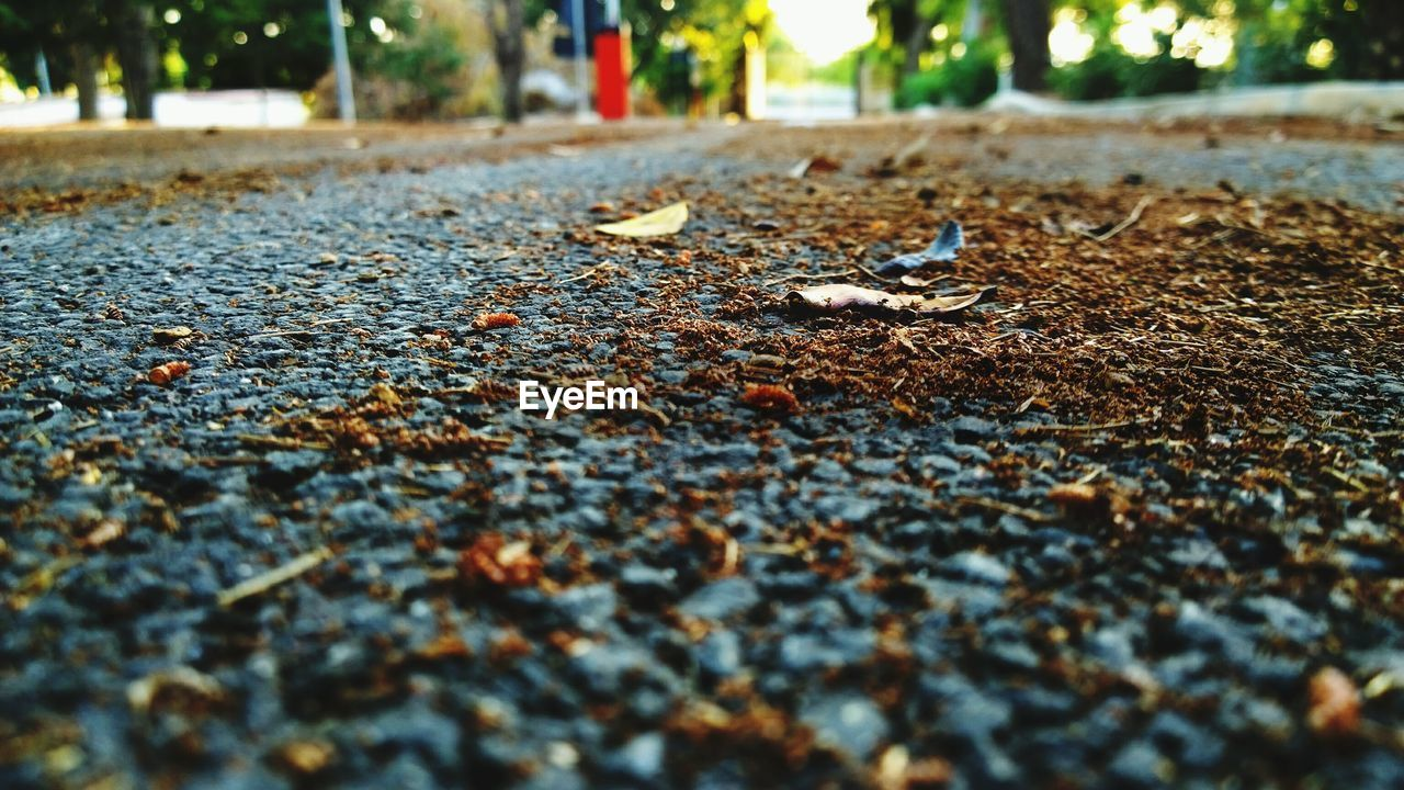 leaf, autumn, surface level, change, nature, dry, fallen, leaves, selective focus, day, outdoors, asphalt, street, close-up, no people, beauty in nature, road, fragility, tree
