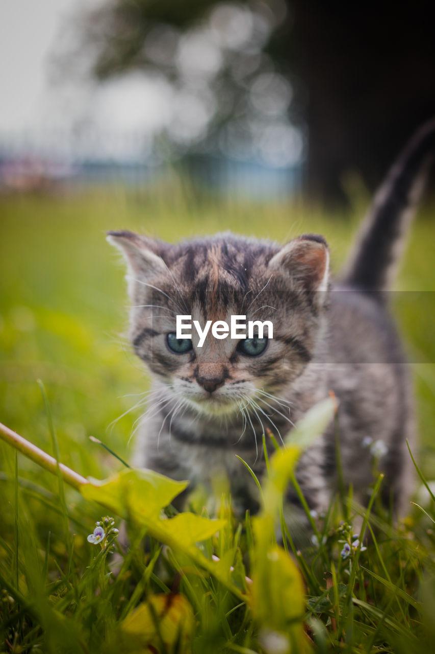 PORTRAIT OF CAT IN A FIELD
