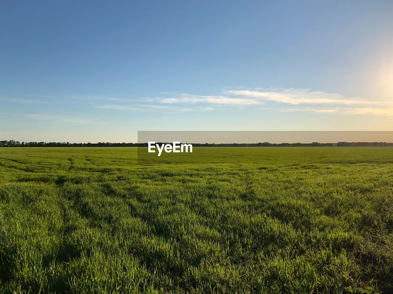landscape, sky, environment, field, plant, scenics - nature, tranquility, tranquil scene, land, green color, beauty in nature, growth, grass, nature, rural scene, agriculture, no people, non-urban scene, cloud - sky, day, outdoors