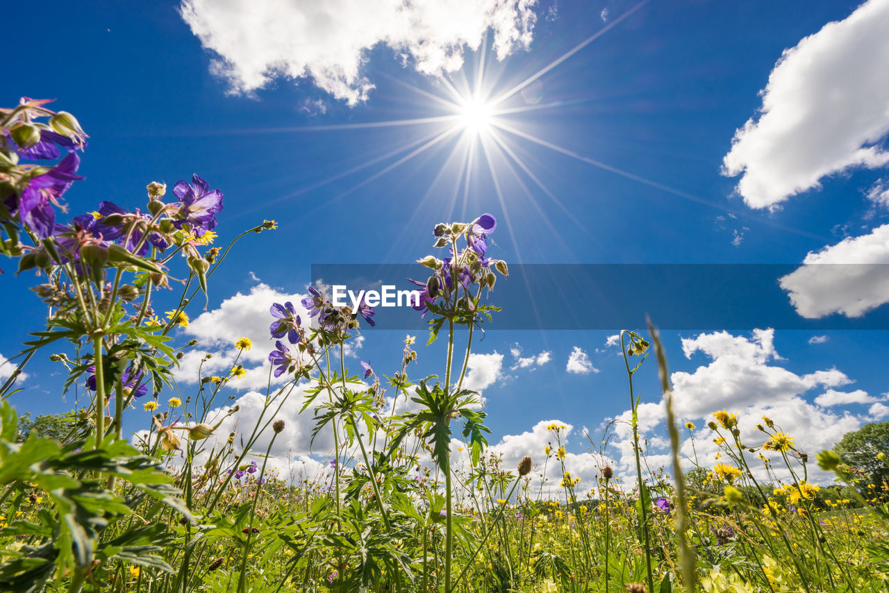 Low Angle View Of Flowers Blooming On Field Against Sky