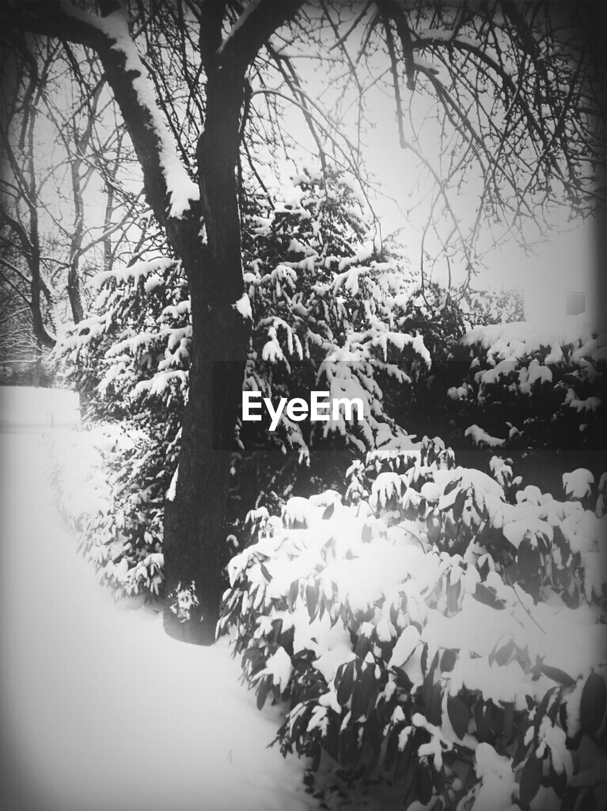 tree, winter, snow, branch, tranquility, cold temperature, nature, tranquil scene, beauty in nature, growth, weather, bare tree, scenics, season, covering, frozen, tree trunk, day, no people, outdoors
