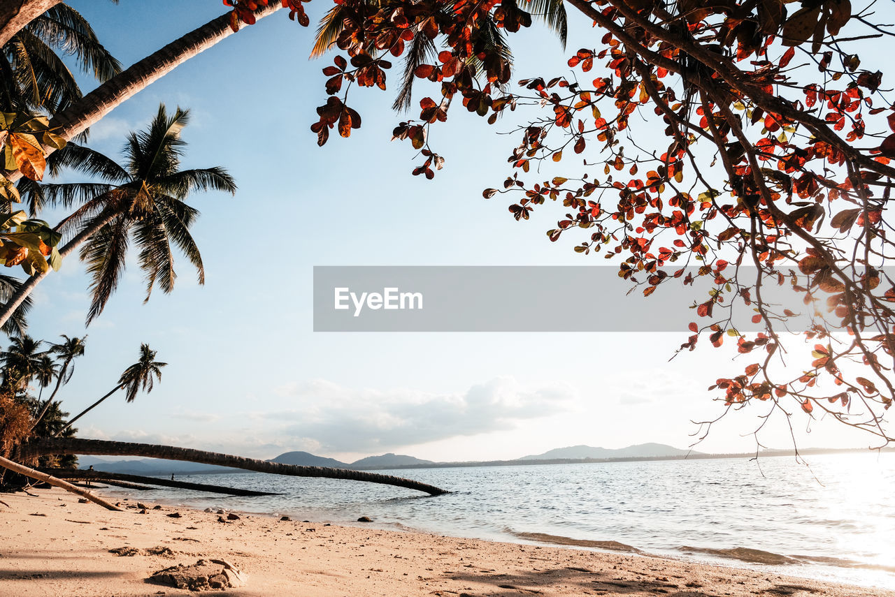 sky, tree, water, sea, beauty in nature, plant, beach, tranquility, nature, land, scenics - nature, tranquil scene, palm tree, no people, tropical climate, day, outdoors, growth, branch, horizon over water, coconut palm tree