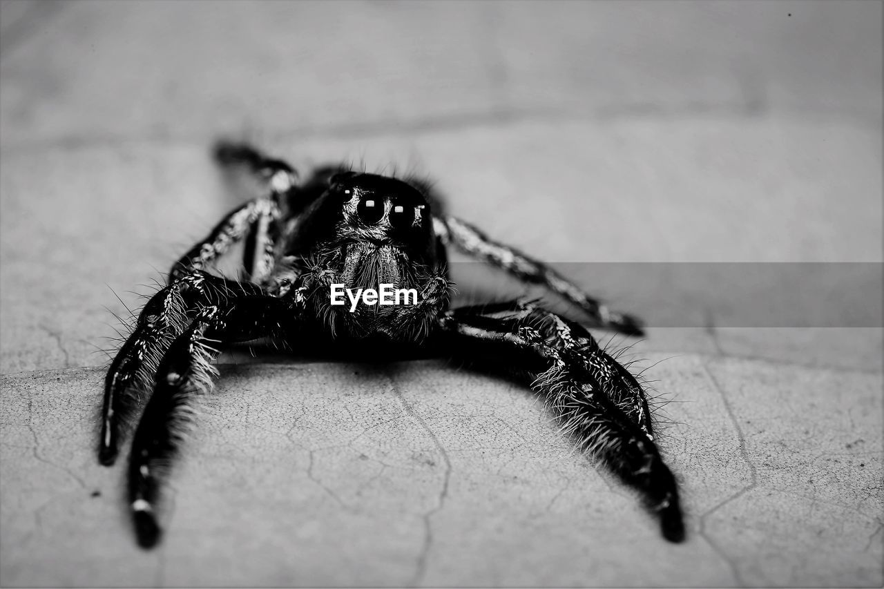 animal themes, one animal, animal, animal wildlife, animals in the wild, invertebrate, insect, selective focus, close-up, arachnid, arthropod, no people, zoology, black color, flooring, outdoors, day, nature, animal body part, spider