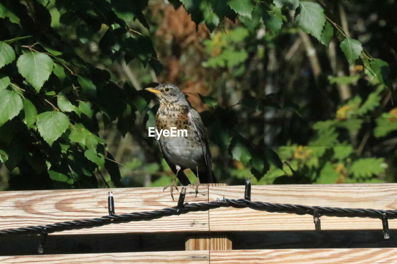 animal themes, animal, vertebrate, one animal, animal wildlife, animals in the wild, bird, perching, day, nature, wood - material, sparrow, focus on foreground, sunlight, no people, outdoors, tree, plant, close-up, bird of prey