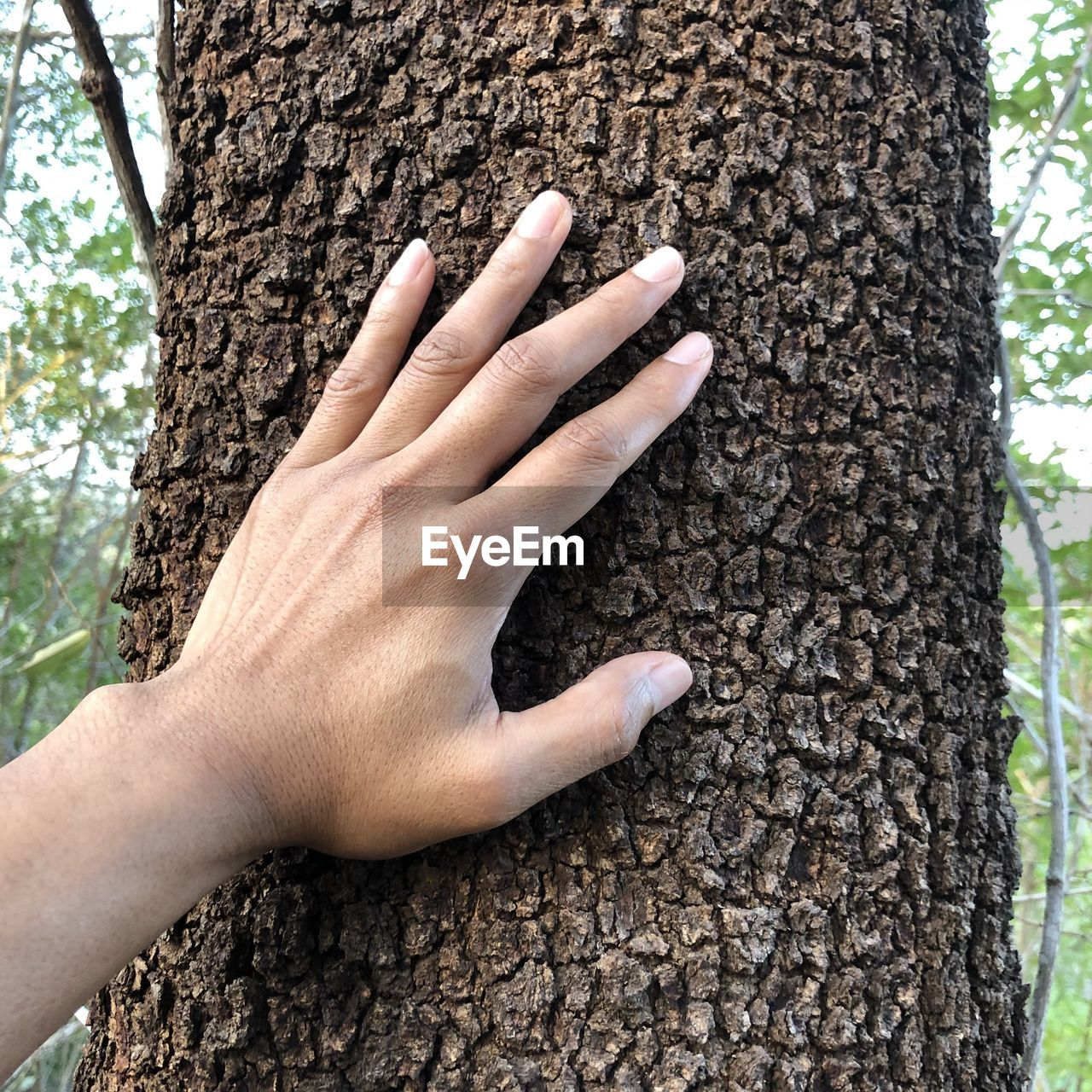 CLOSE-UP OF HUMAN HAND TOUCHING TREE TRUNK