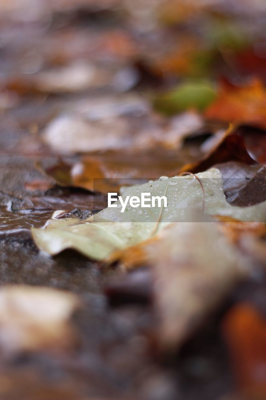selective focus, close-up, leaf, food and drink, plant part, food, no people, full frame, still life, backgrounds, autumn, nature, day, freshness, dry, leaves, change, brown, outdoors