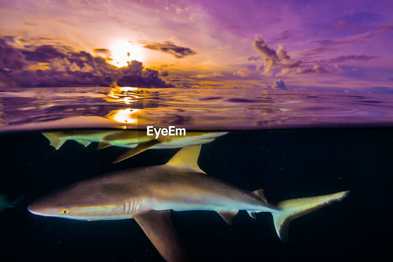 water, sea, swimming, underwater, animals in the wild, sea life, marine, animal wildlife, animal, animal themes, fish, nature, vertebrate, no people, beauty in nature, group of animals, orange color, close-up, sunset, undersea, outdoors